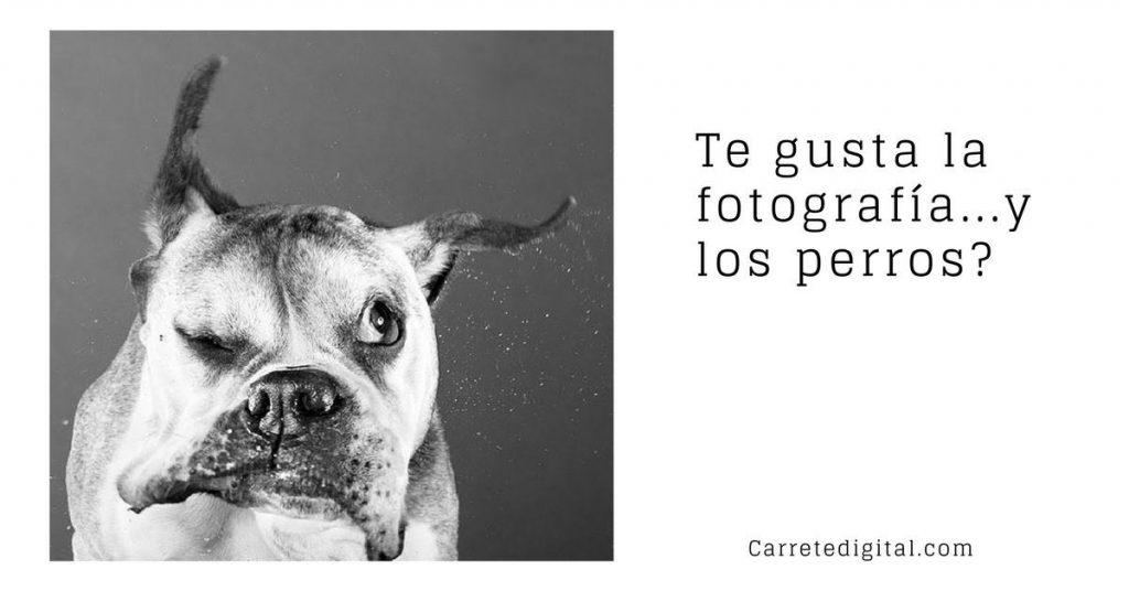 ¿Te gusta la fotografía… y los perros?
